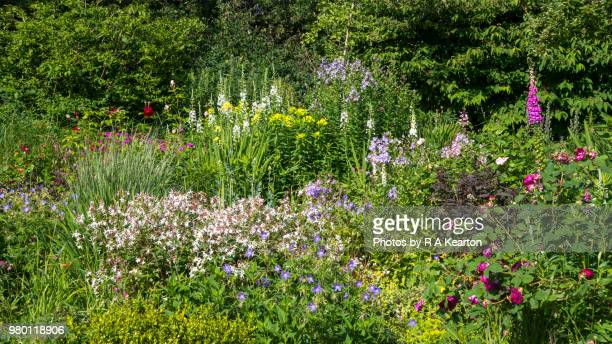 English cottage garden in June