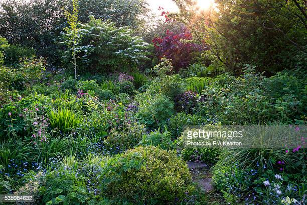 English cottage garden on an early summer evening