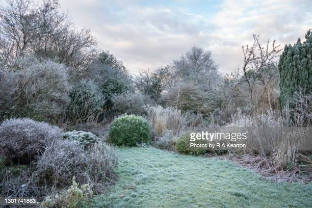 english country garden covered in frost - garden stock pictures, royalty-free photos & images