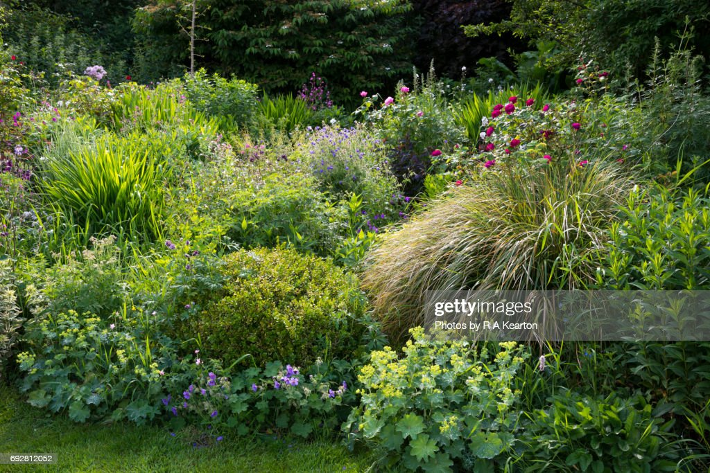 English country garden in early June : Stock-Foto