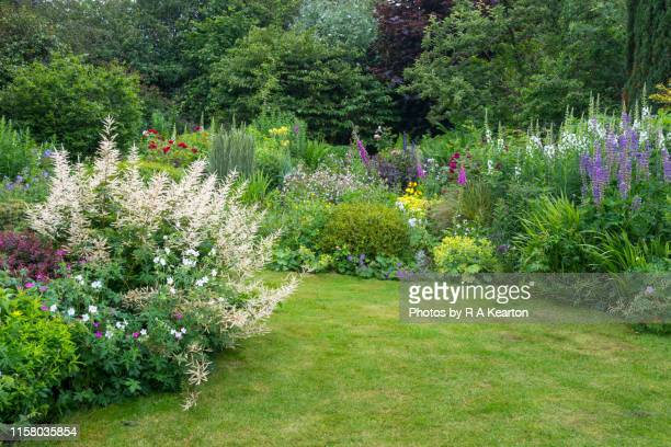 english country garden in late june - lawn stock pictures, royalty-free photos & images
