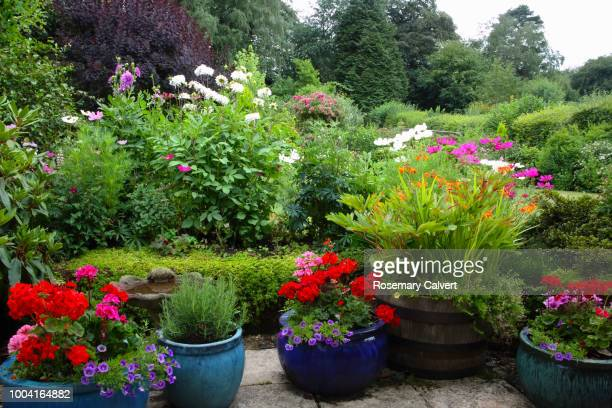 english country garden on overcast summer's day. - pot plant stock pictures, royalty-free photos & images