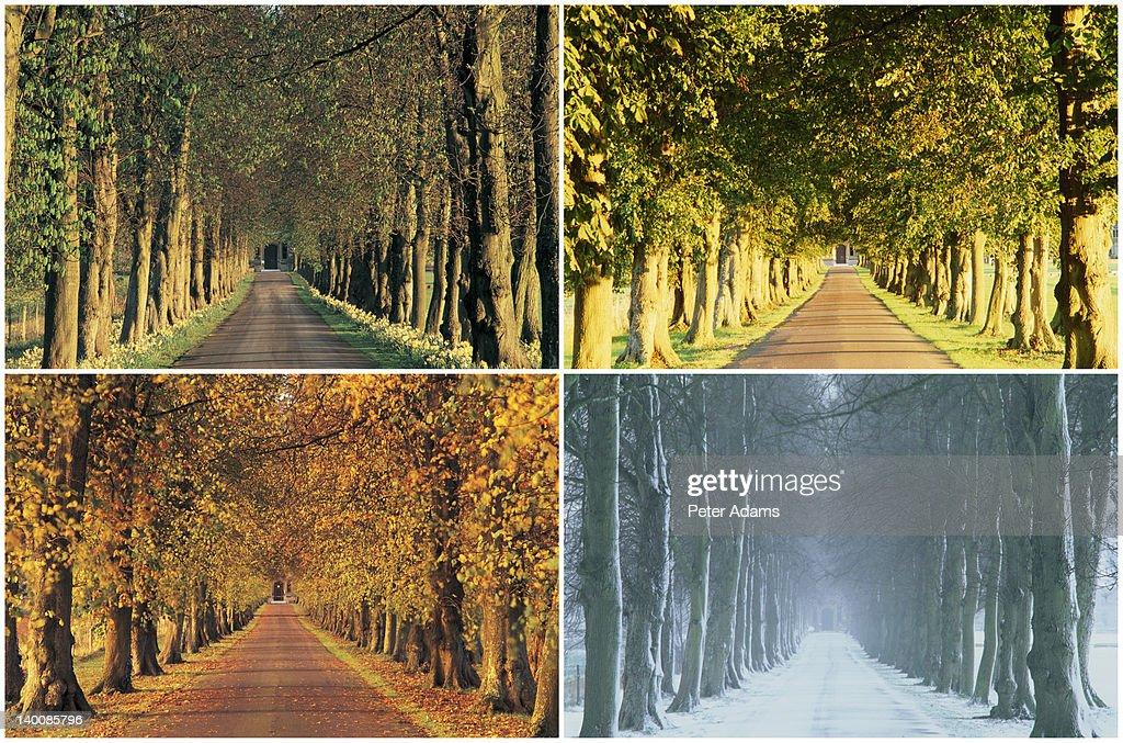 English country lane in four seasons