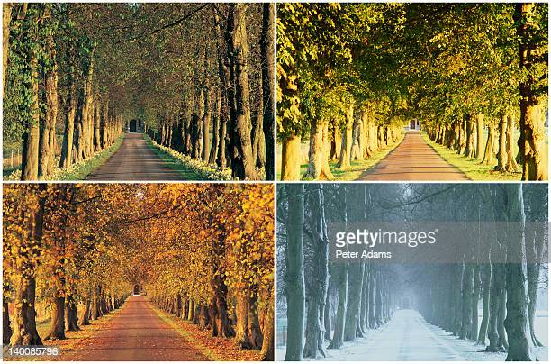 english country lane in four seasons - jahreszeit stock-fotos und bilder