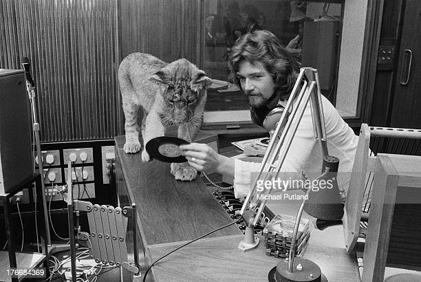 English disc jockey and host of The Radio 1 Breakfast Show Noel Edmonds in a studio with a lion cub 1st September 1973