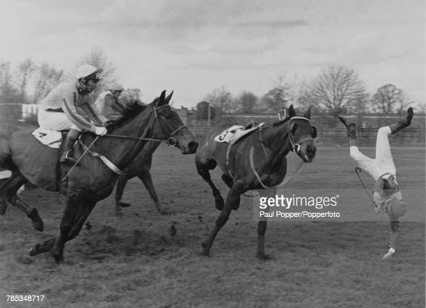 English jockey Bob Champion falls from his horse Superswift at the open ditch during the Alanbrooke Memorial Steeple Chase at Sandown Park Racecourse...