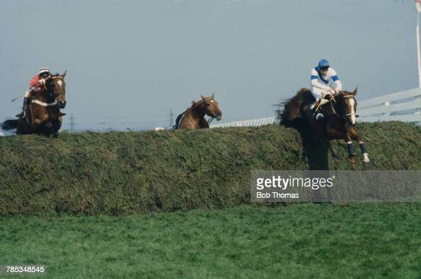 English jockey Bob Champion riding Aldaniti to victory in the Grand National at Aintree Racecourse Liverpool 4th April 1981