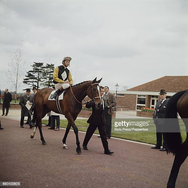 English jockey Lester Piggott pictured riding the racehorse Super Honey out prior to racing at a horse race meeting in England in April 1971