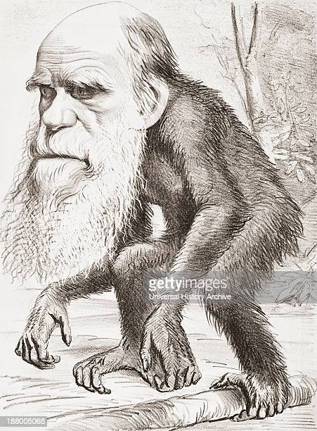English Naturalist Here Portrayed As An Ape In A Cartoon In The Hornet Magazine Of 22 March 1871. The Caption Read, A Venerable Orang-Outang - A...