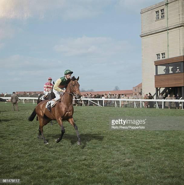 English professional jockey Lester Piggott rides racehorse Ribocco at Newmarket Racecourse in Suffolk England in 1967