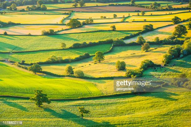 english rolling agricultural landscape - rural scene stock pictures, royalty-free photos & images