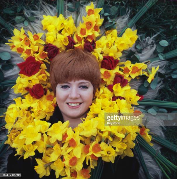 English singer Cilla Black surrounded by daffodils, circa 1965.