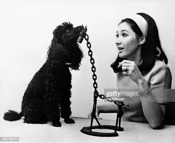 English television presenter Jan Leeming and her pet poodle Sheba inspect a model of a giraffe one of the pieces of 'instant art' on the BBC...