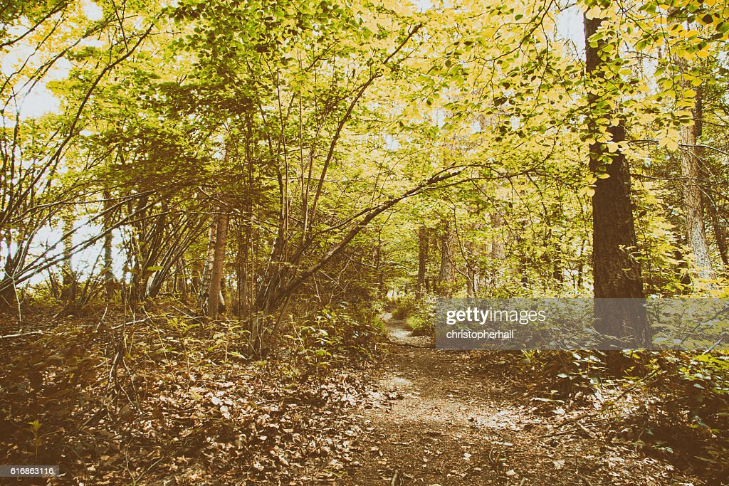 English woodland path with the sun breaking through the leaves : Stock Photo