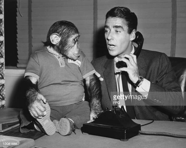 English-American actor Peter Lawford makes a phone call, watched by chimpanzee J Fred Muggs , star of NBC's 'Today Show', 19th January 1955.