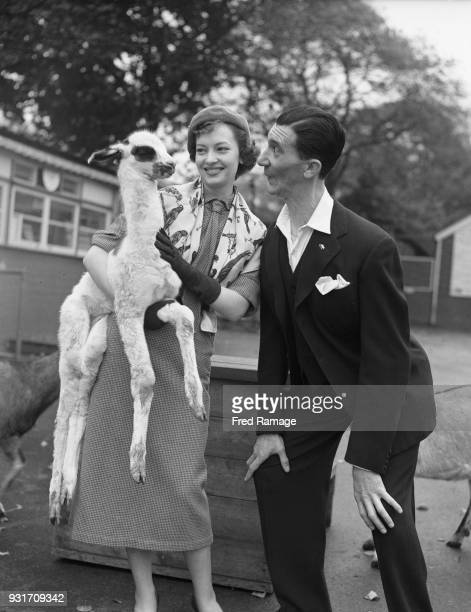 Englishborn actress singer and dancer Jeannie Carson and comic actor Nat Jackley visit Paul the baby llama at London Zoo 17th October 1951 They are...