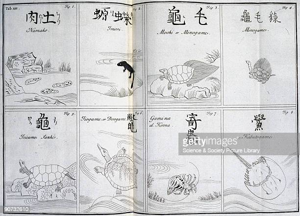 Engraving after Japanese prints including a water lizard turtles a tortoise and a hermit crab From 'The History of Japan' by Engelbert Kaempfer...