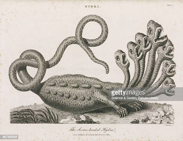 Engraving by J Chapman of the manyheaded monster of Greek mythology To kill the monster was the second labour of Hercules He did this by cutting off...