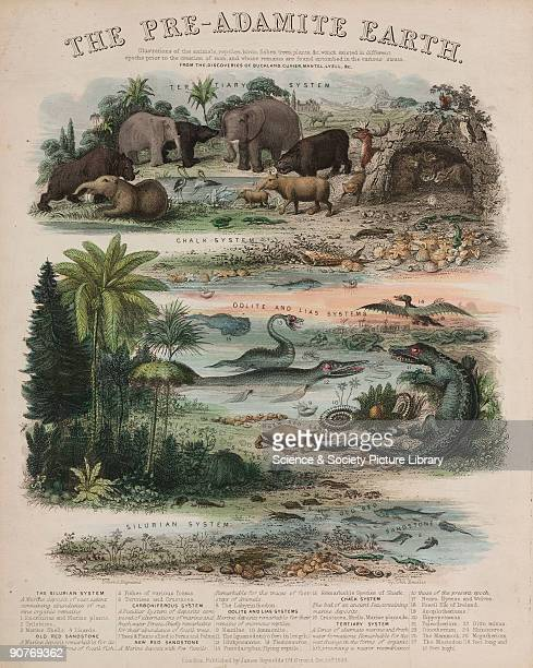 Engraving by John Emslie after his original drawing showing illustrations of the various mammals birds reptiles fish trees and plants which existed...