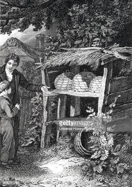 Engraving depicting a beekeeper standing near straw Beehives which are kept under a thatched wooden shelter Engraved by John Romney an English artist...