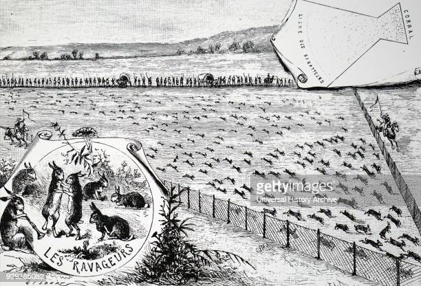Engraving depicting a rabbit drive in California This was the main way of controlling the numbers Dated 19th Century