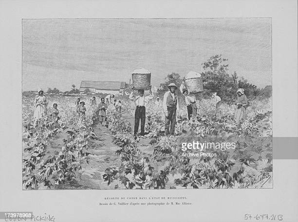 Engraving depicting African American slaves picking cotton from the fields of a plantation USA circa 18301880