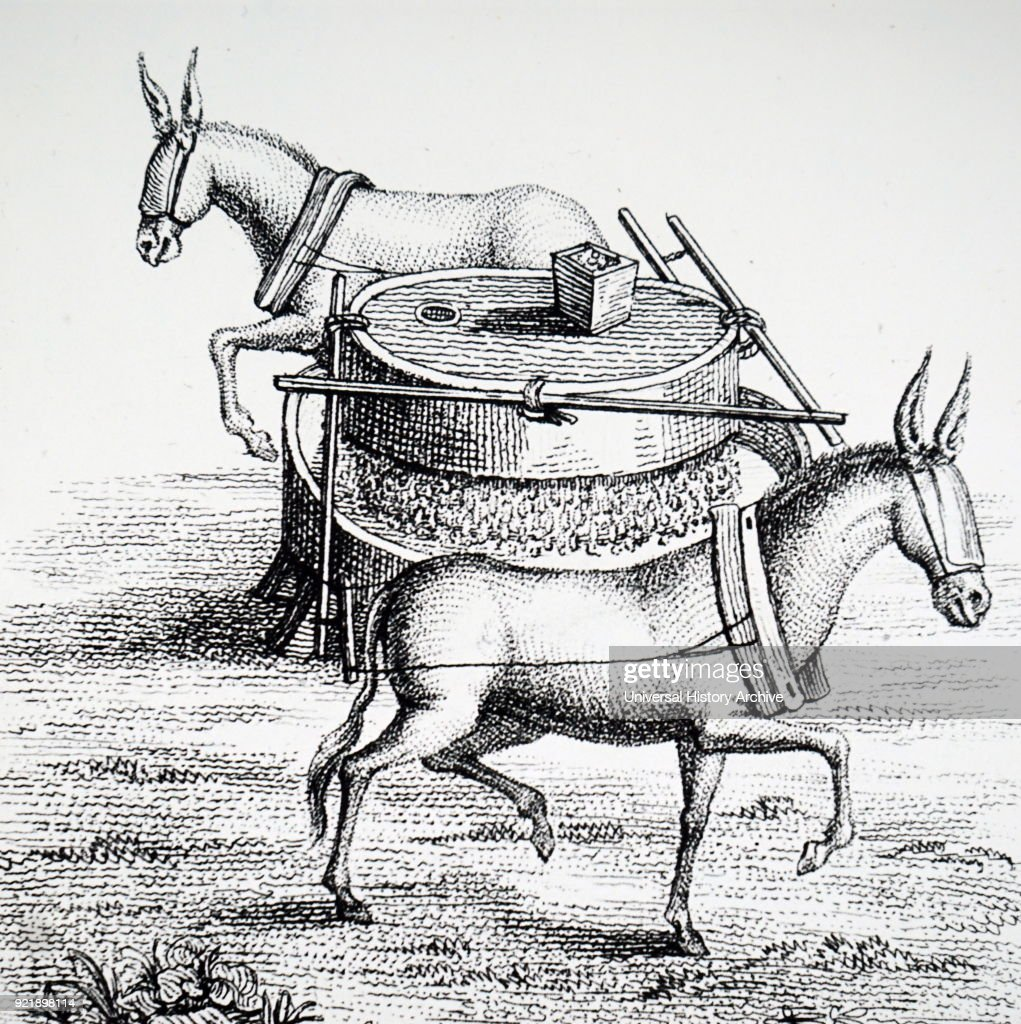 Engraving depicting mules grinding rice. Dated 19th century.
