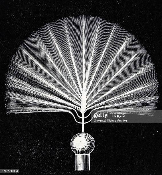Engraving depicting Nikola Tesla's A.C. Experiments: high frequency brush discharge. Nikola Tesla a Serbian-American inventor, electrical engineer,...
