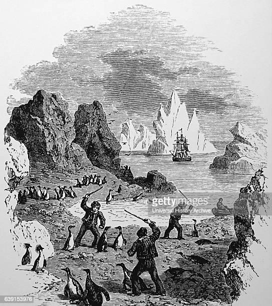 Engraving depicting sailors clubbing Boobies to obtain meat Dated 19th Century