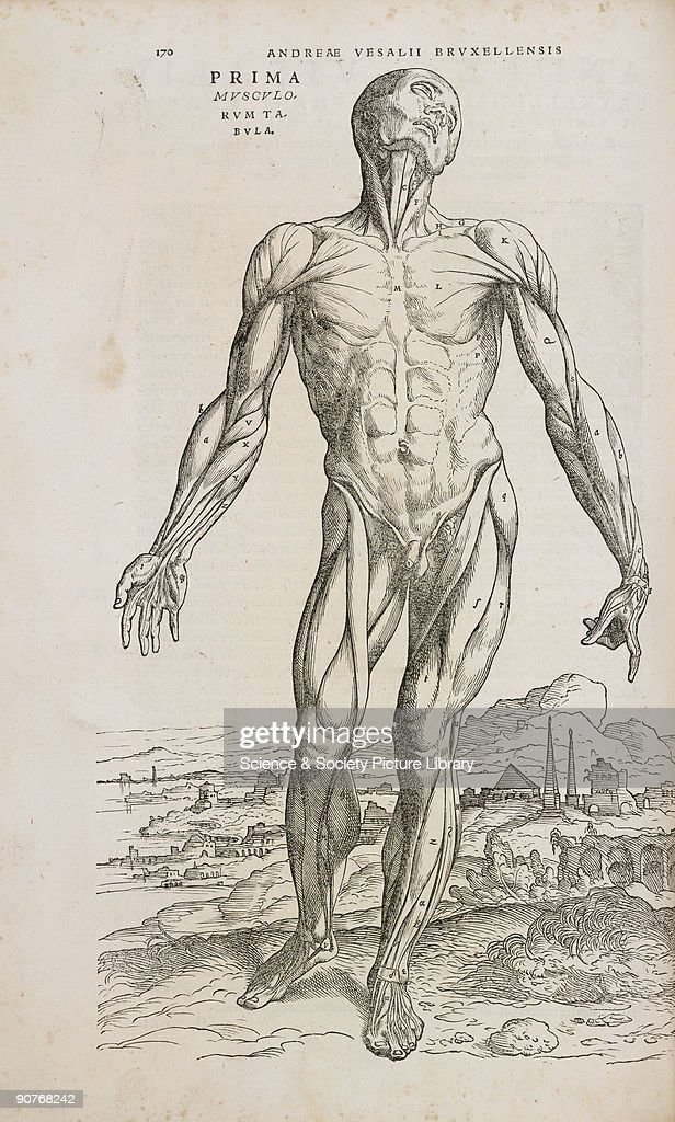 Front view of the superficial muscles of the male human body, 1543. : News Photo