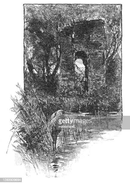 engraving illustration of the ruins of jamestown, first permanent english settlement in the americas - williamsburg virginia stock pictures, royalty-free photos & images
