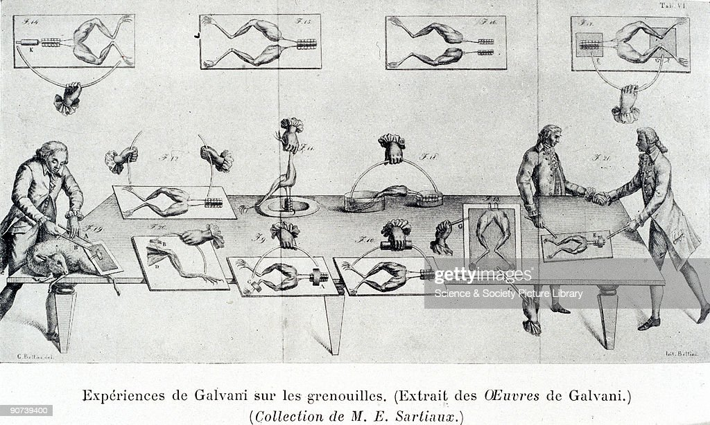 engraving luigi galvani discovered animal electricity in the late picture id90739400?s=612x612 frog legs stock photos and pictures getty images