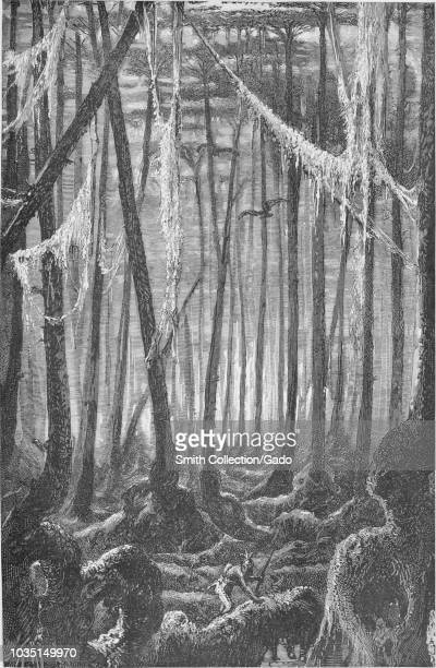 Engraving of an Indian hunter in a Cypress Swamp near the Mississippi from the book The Southern states of North America by Edward King 1875 Courtesy...