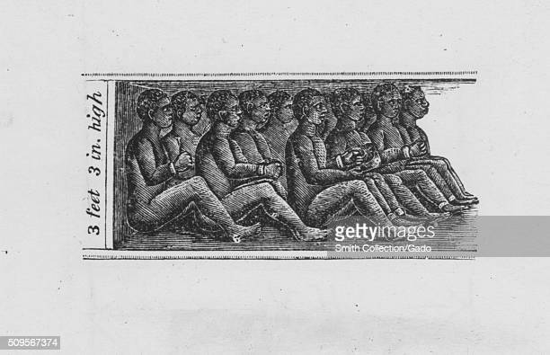 Engraving of chained African slaves in cargo hold of the slave ship Amistad from Africa to Havana measuring three feet and three inches high by John...