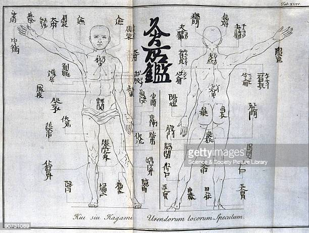 Engraving of the meridian points on the human body which are used in moxabustion the burning of leaves of moxa the Chinese wormwood tree The parts of...