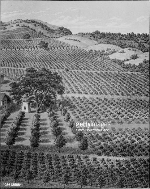 Engraving of the Ruby Hill vineyard in Livermore Valley Alameda County California from the book Illustrated album of Alameda County California by Jos...