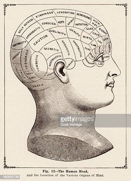 Engraving page from the book 'Hill's Album of Biography and Art' features an illustration of a human head and 'the Locations of Different Organs of...