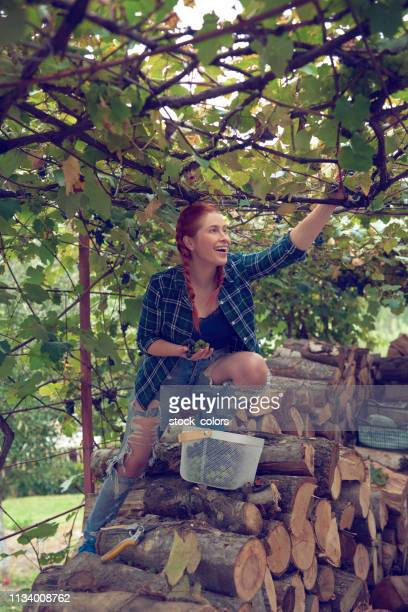 enjoy her work in the wineyard - wineyard stock photos and pictures