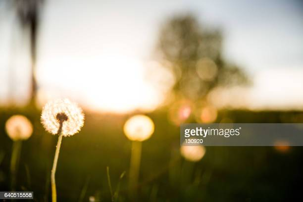 enjoy the dawn - light natural phenomenon stock pictures, royalty-free photos & images