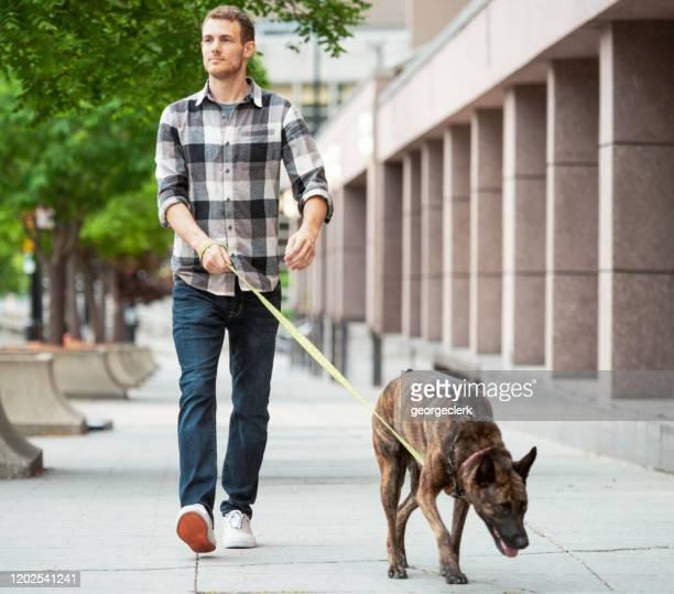 genieten van een hondenwandeling - redding sporten stockfoto's en -beelden