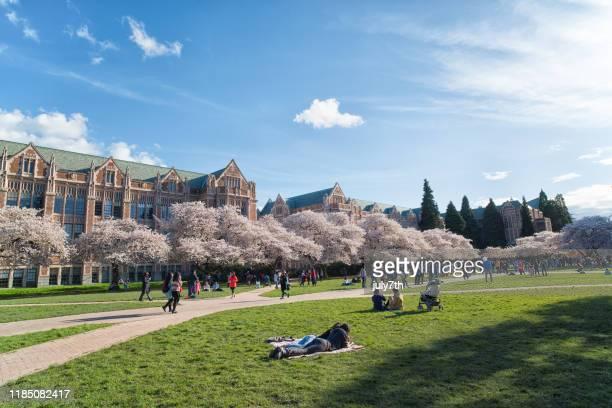 ワシントン大学キャンパスで桜を楽しむ - ワシントン大学 ストックフォトと画像