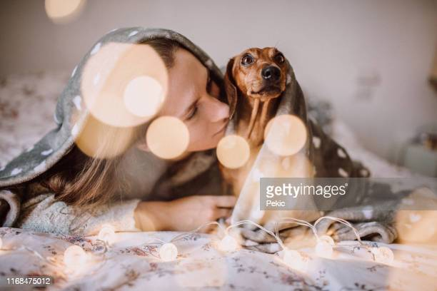 enjoying christmas morning with her beautiful dachshund in bed - dachshund christmas stock pictures, royalty-free photos & images