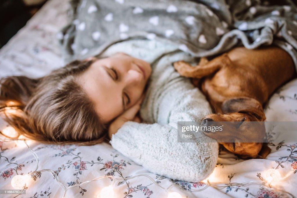 Apprécier le matin de Noel avec son beau Dachshund dans le lit : Photo
