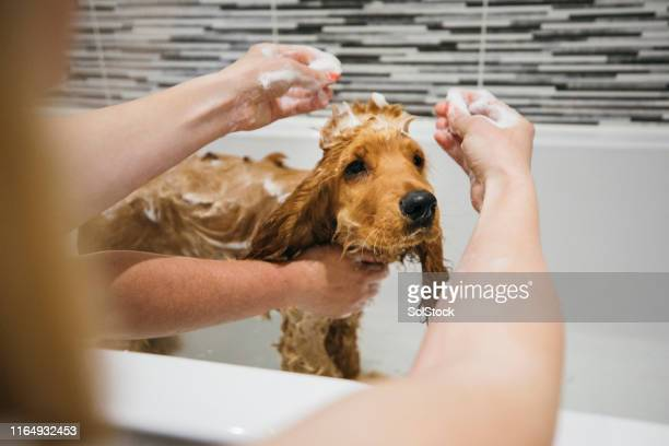 enjoying his bath! - groom stock pictures, royalty-free photos & images