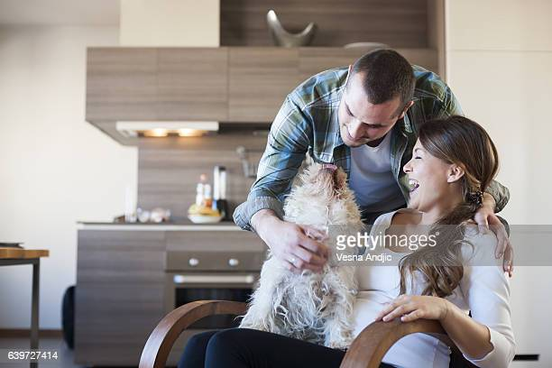 enjoying home - west highland white terrier stock photos and pictures