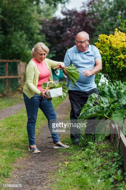 enjoying picking vegetables - community garden stock pictures, royalty-free photos & images