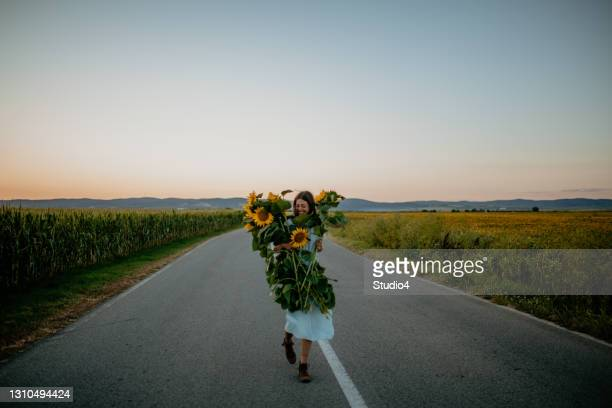 enjoying the sunflowers and corn fields, walking in between - hainaut stock pictures, royalty-free photos & images