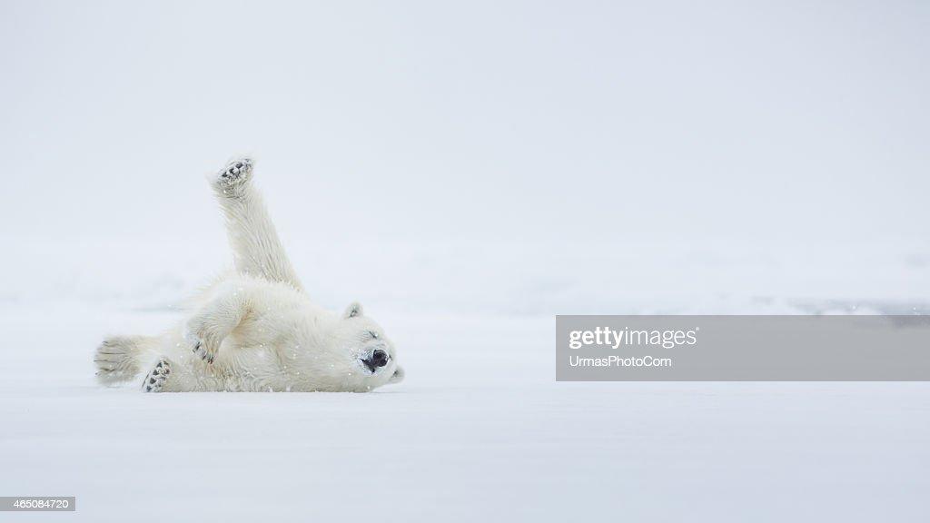 Spaß auf dem Eis : Stock-Foto