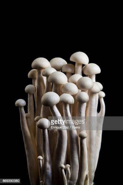 enoki mushroom still life - edible mushroom stock pictures, royalty-free photos & images