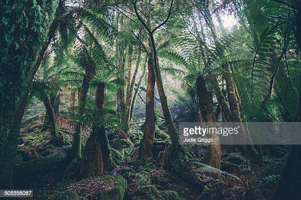 Enormous fern forest in National Park